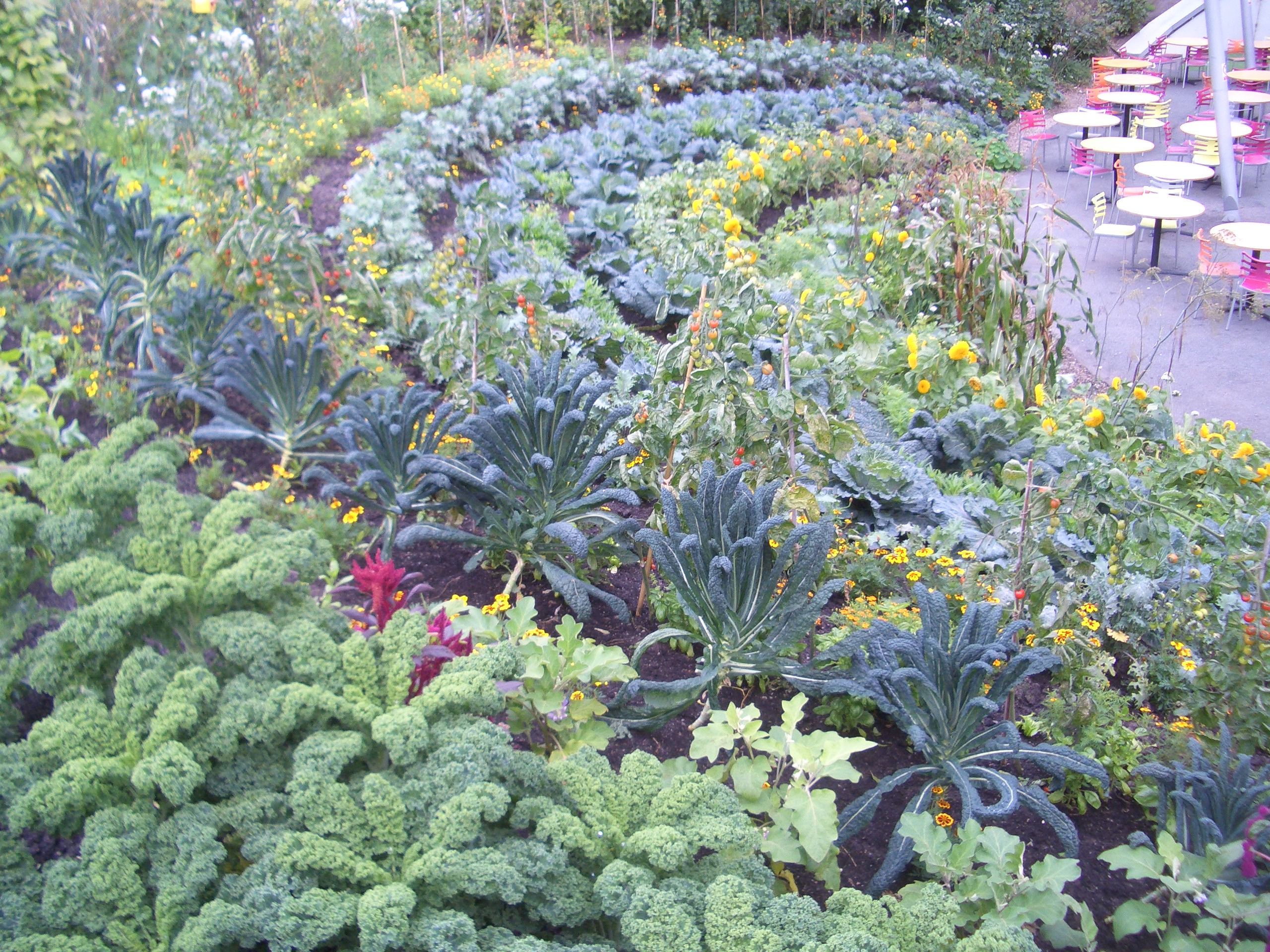 Ornamental Kitchen Garden Similiar Ornamental Vegetable Garden Keywords