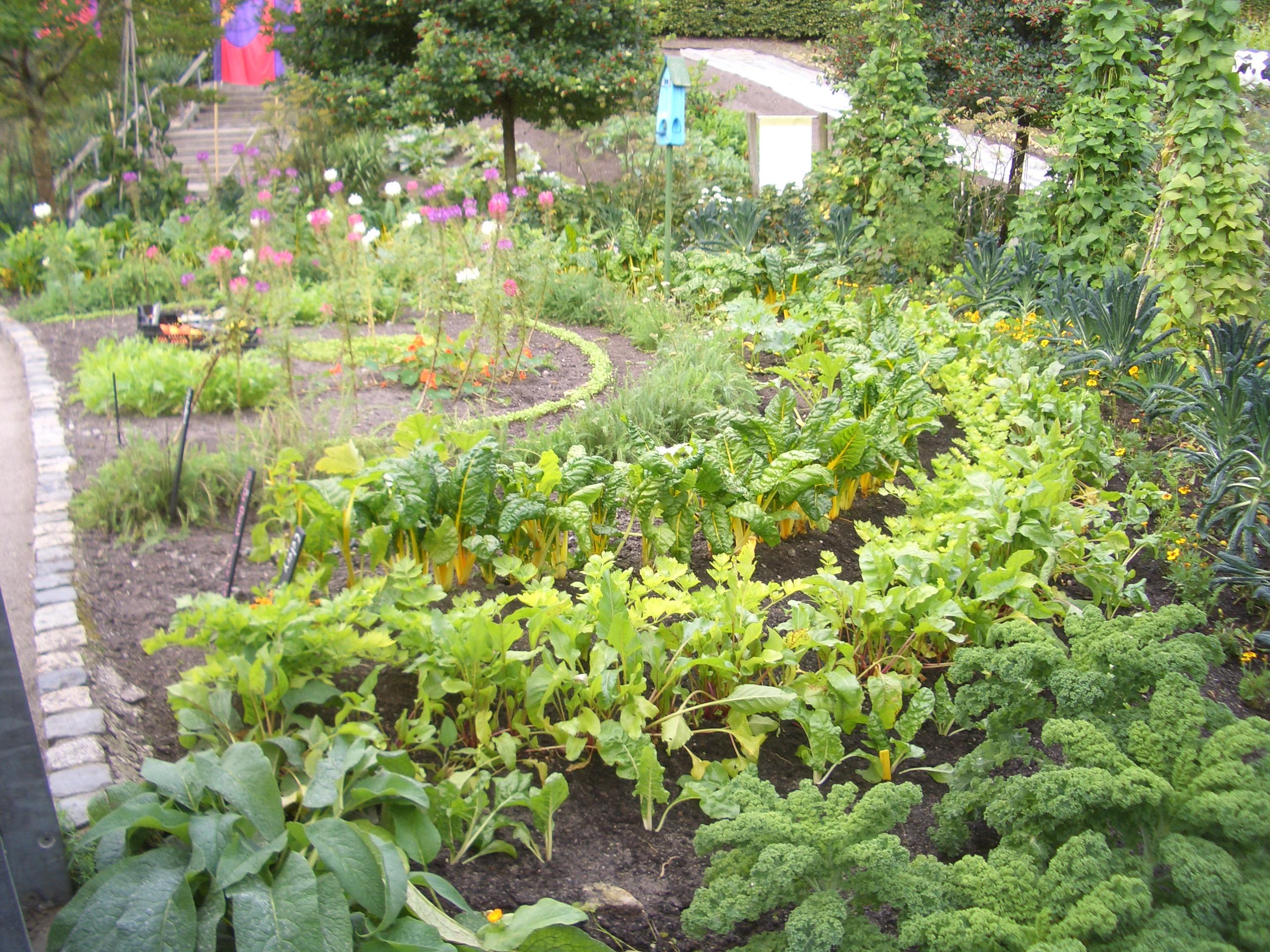Edible Gardening | Verdant Earth